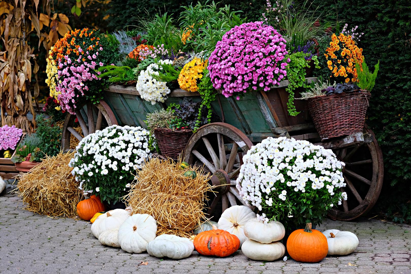 Herbstdeko foto bild jahreszeiten herbst natur for Bilder herbstdeko