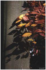 Herbsteindrücke November 2010