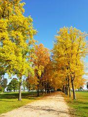 Herbsteinzug bei Schloss Dyck