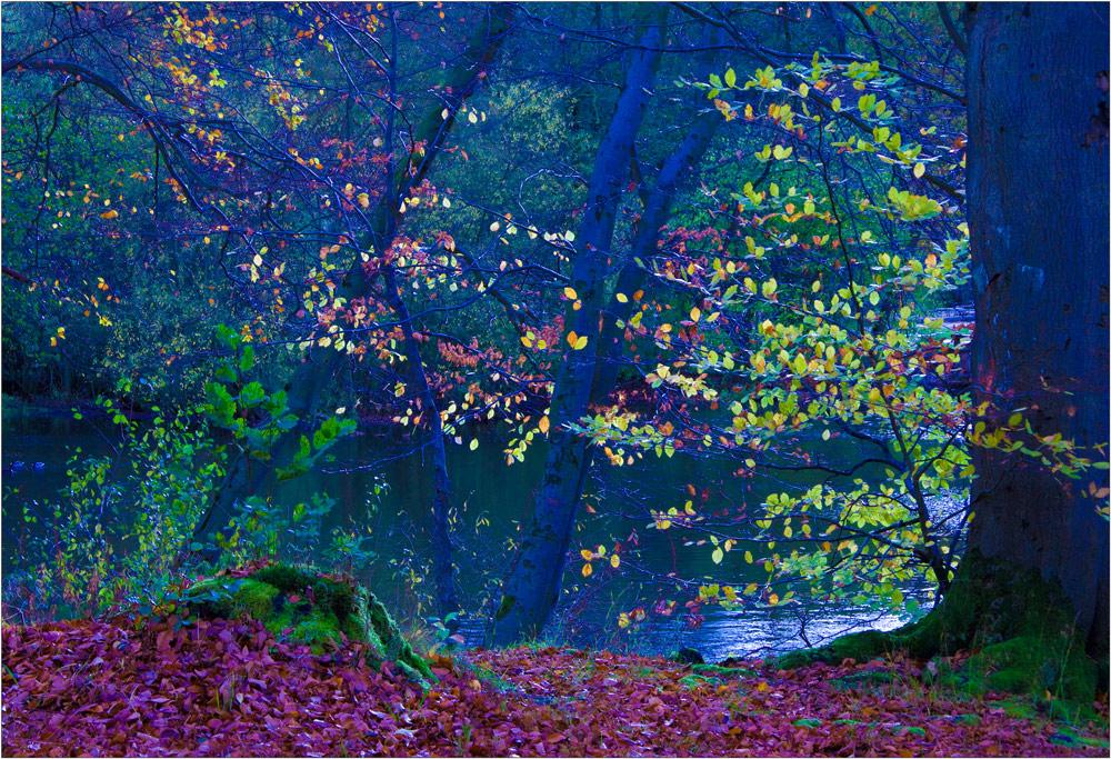 Herbstexperiment I
