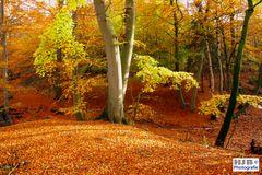 Herbstfärbung 1