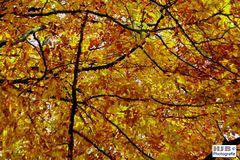 Herbstfärbung 3