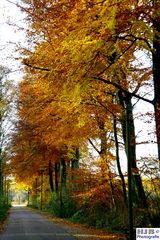 Herbstfärbung 4