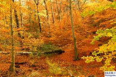 Herbstfärbung 5