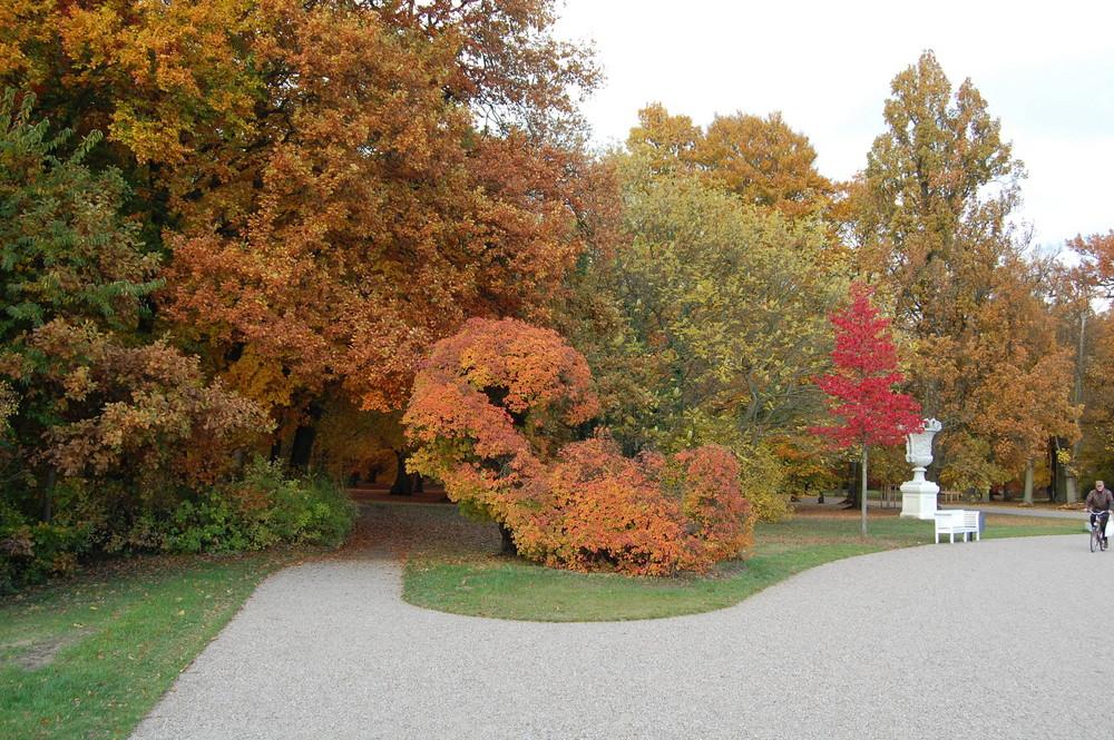 Herbstfärbung im Ludwigsluster Schlosspark