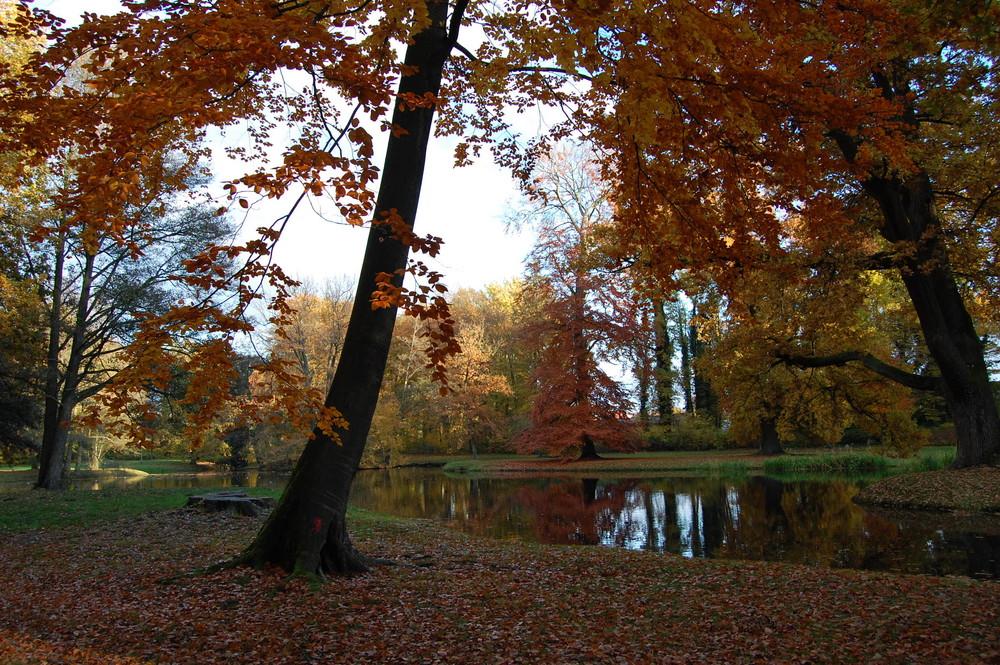Herbstfärbung im Ludwigsluster Schlosspark Inselteich