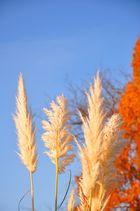 Herbstfantasie