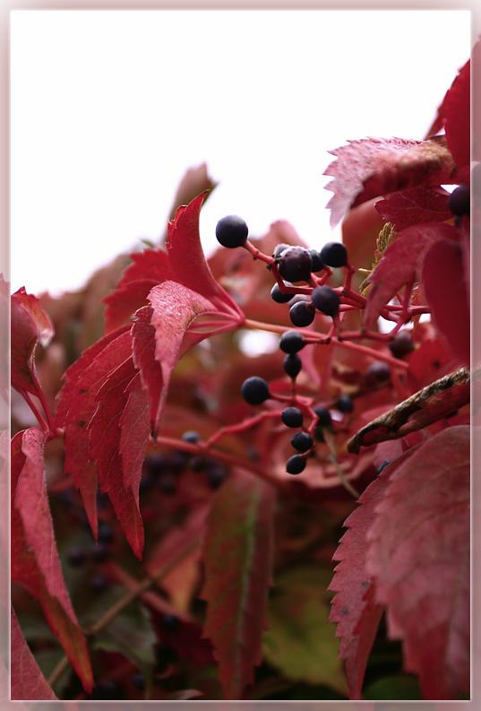 Herbstfarbe