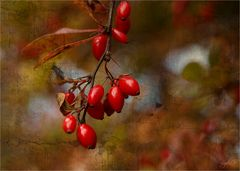 ....Herbstfarben...