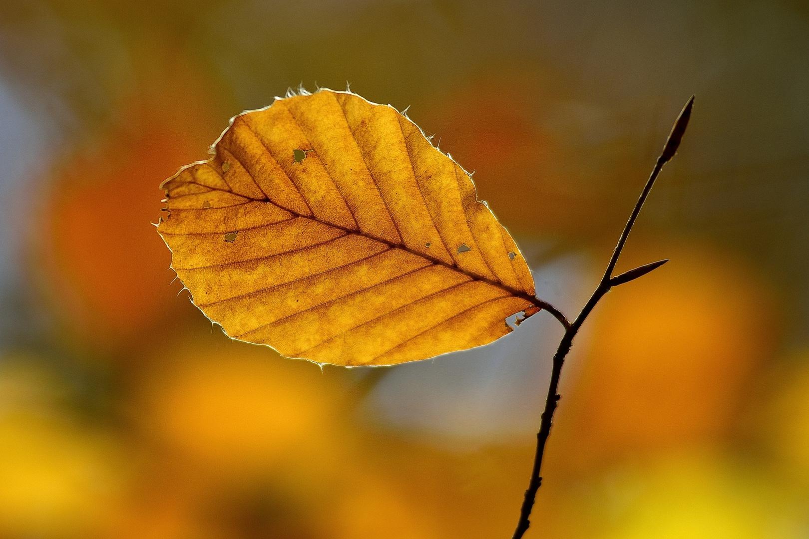 Herbstfarben 04