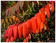 - Herbstfarben 1 -
