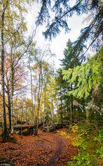 Herbstfarben 11