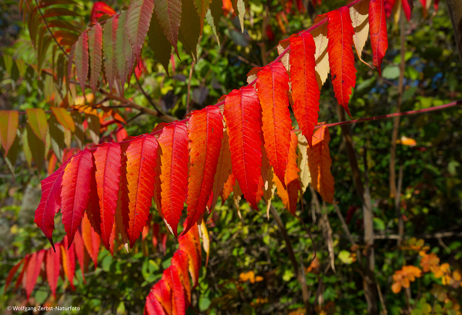 --- Herbstfarben ---