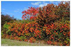- Herbstfarben 2 -