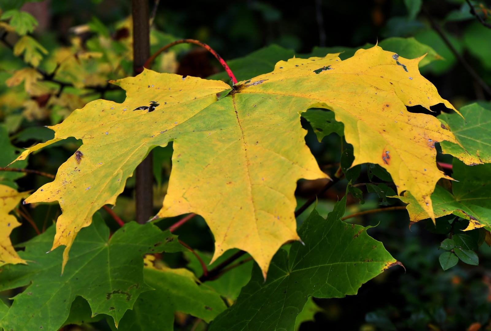 Herbstfarben 2