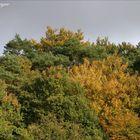 Herbstfarben (2)