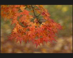 herbstfarben #2, ein japaner in wien