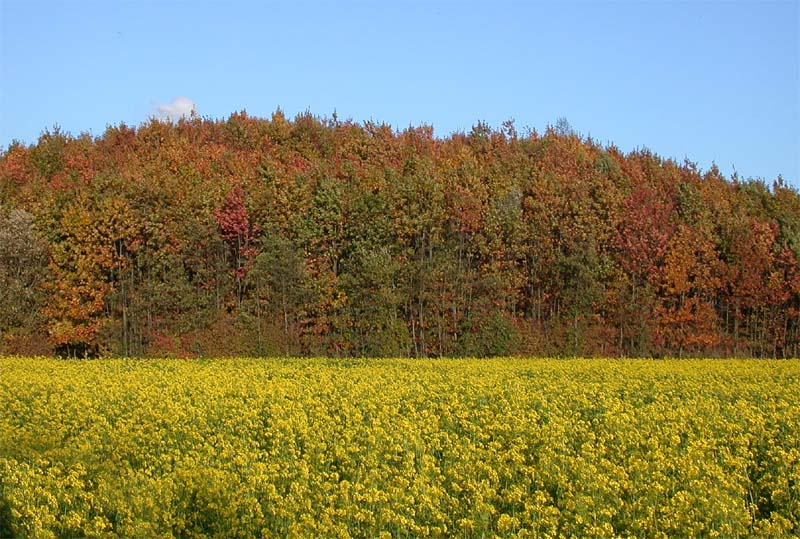 Herbstfarben 2004