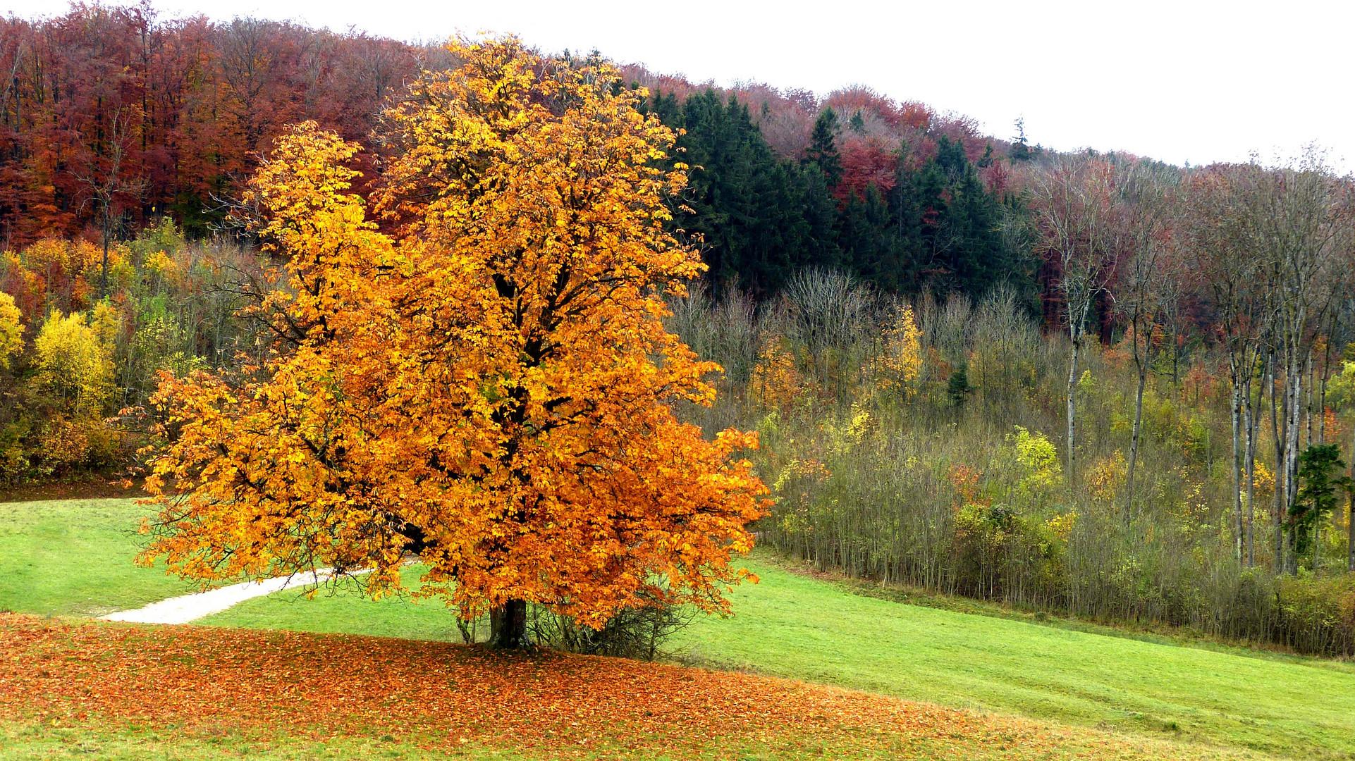 Herbstfarben 26