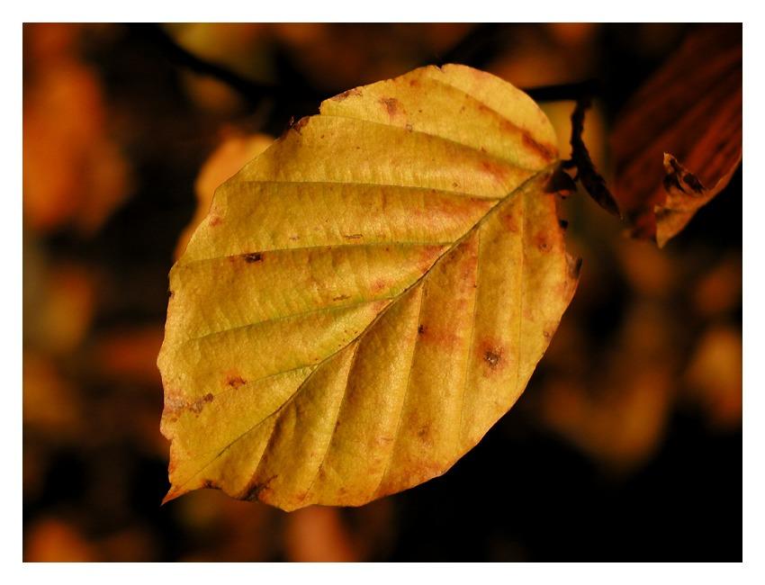 ~~~Herbstfarben~~~