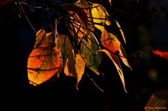 ~ Herbstfarben ~