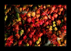 * Herbstfarben *