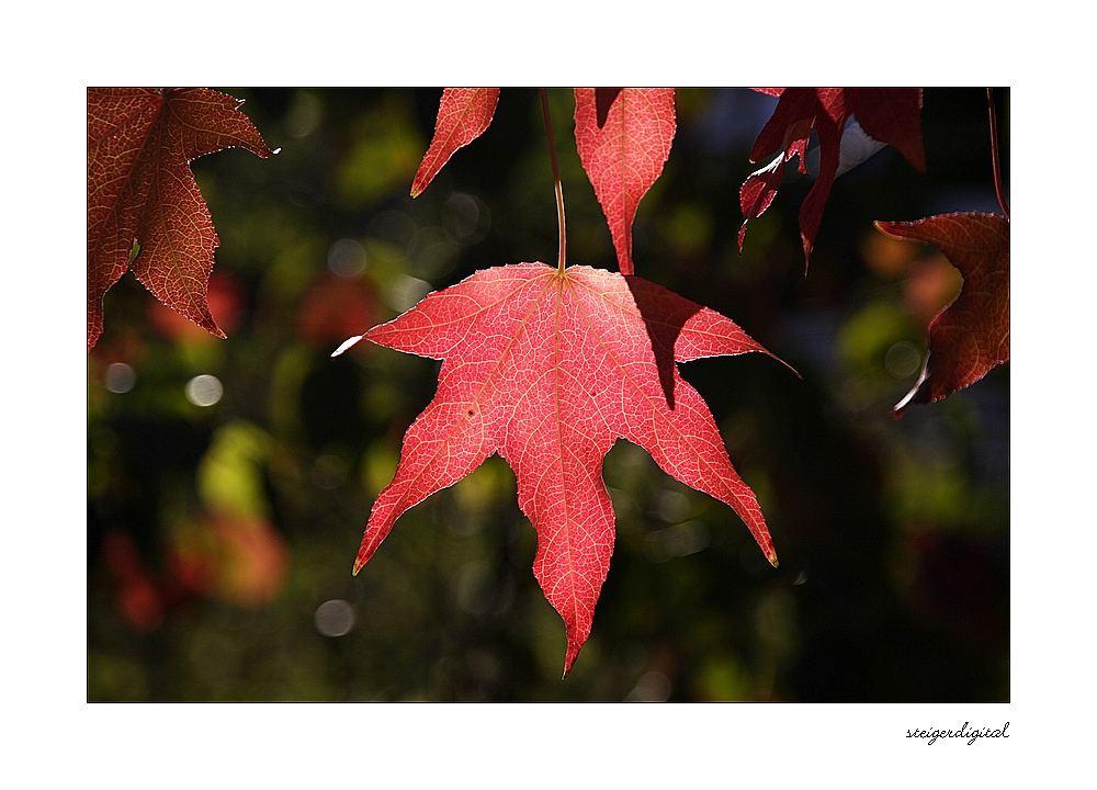 Herbstfarben #3