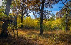 Herbstfarben 4