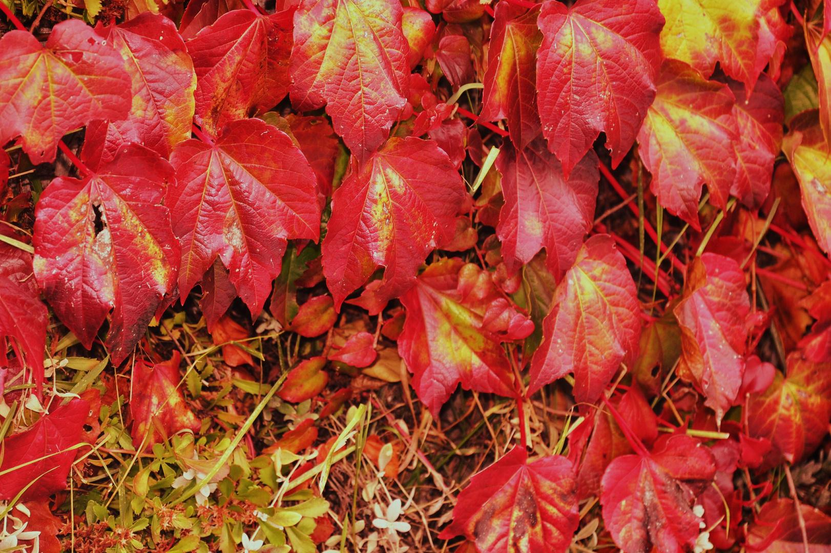 Herbstfarben...