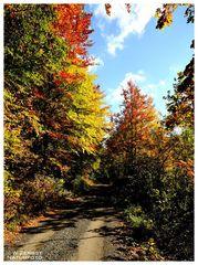 - Herbstfarben 5 -