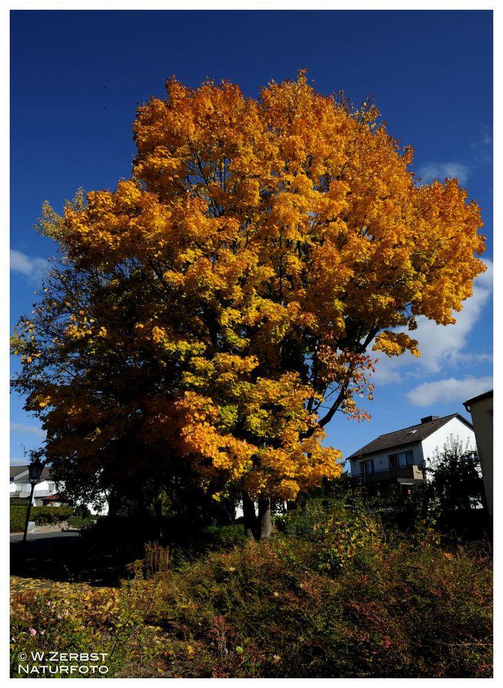 - Herbstfarben 6 -
