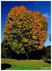 - Herbstfarben 7 -