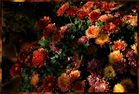*Herbstfarben*