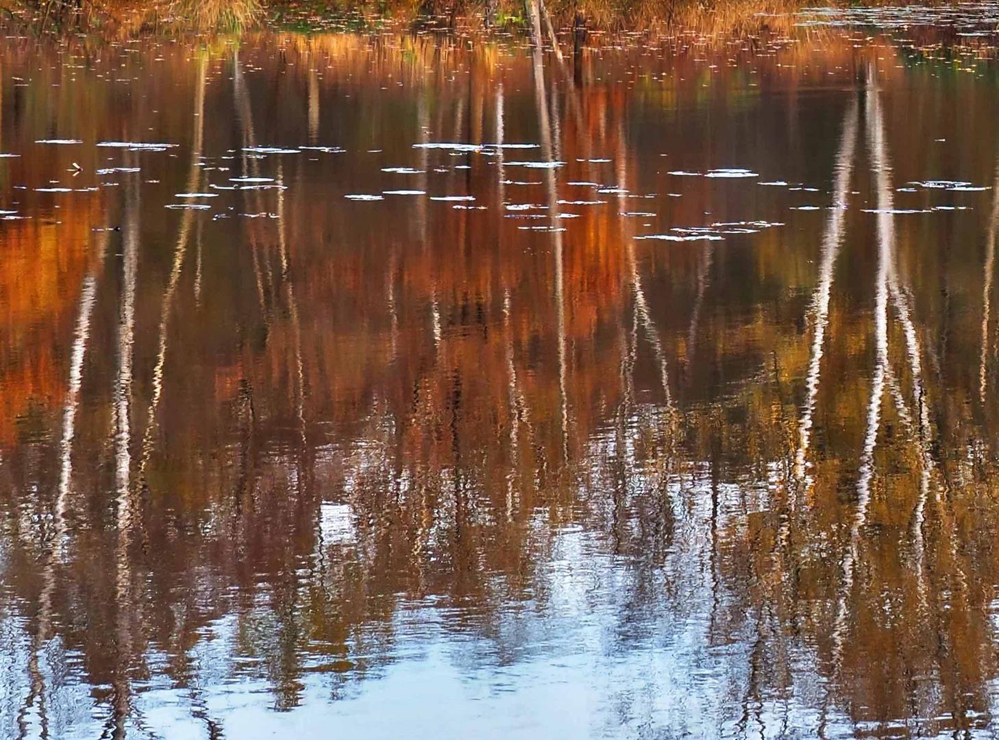 Herbstfarben am Ufer