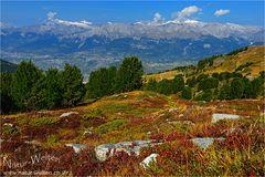 Herbstfarben auf der Crêt du Midi