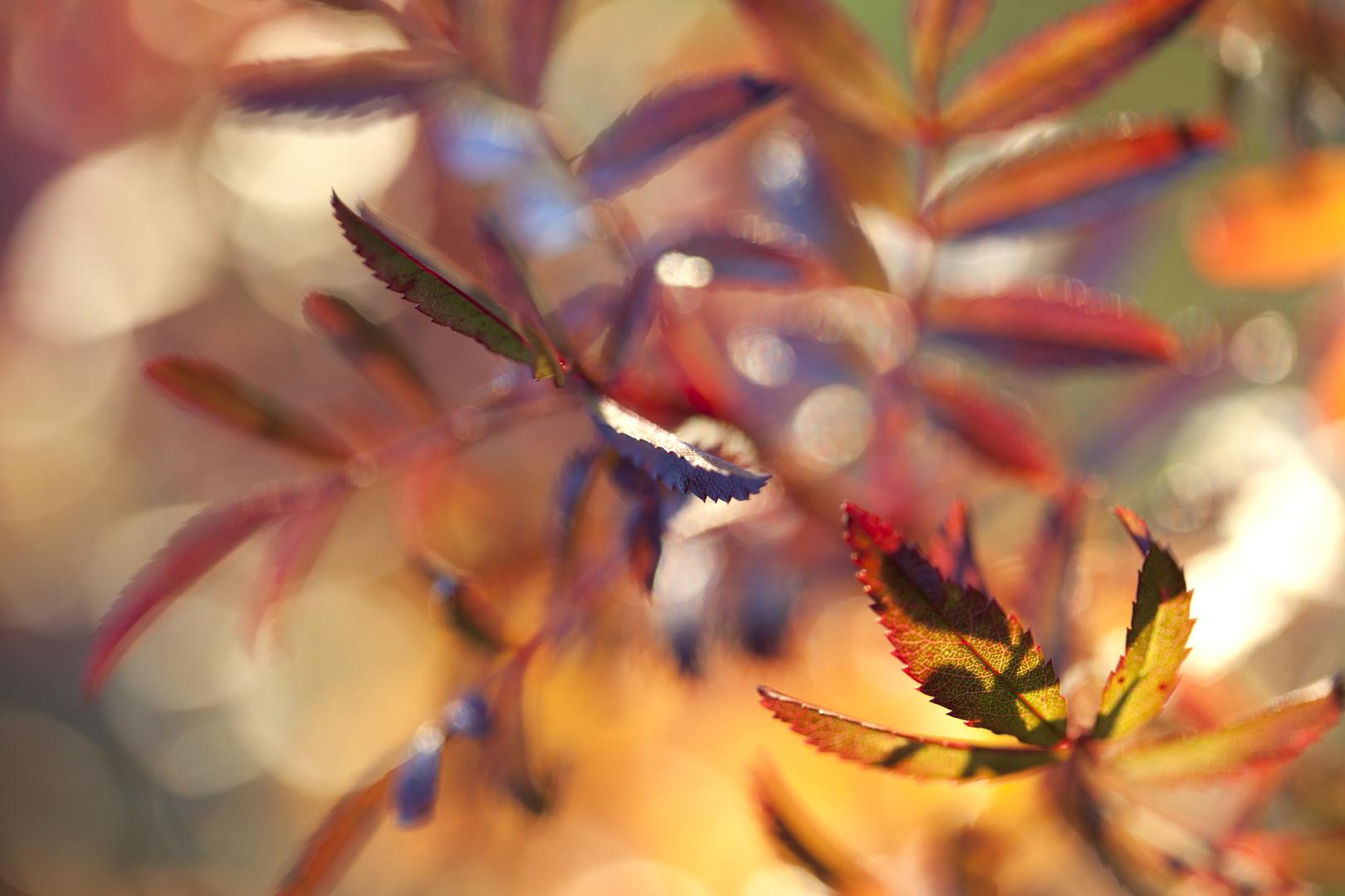 Herbst.farben