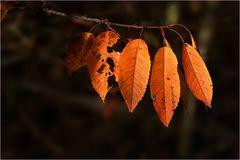 Herbstfarben: Blätter in Orange