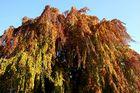Herbstfarben c