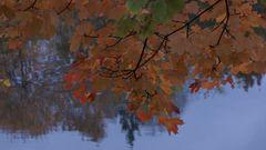 Herbstfarben ;-))