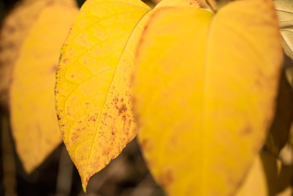 Herbstfarben Gelb und Braun