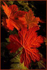 Herbstfarben (Handyfoto)