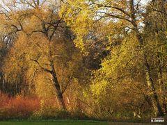 Herbstfarben I