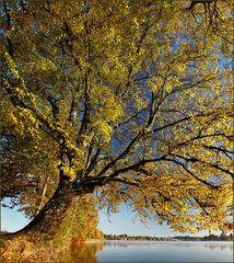 ~ Herbstfarben I ~