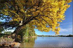 ~ Herbstfarben II ~