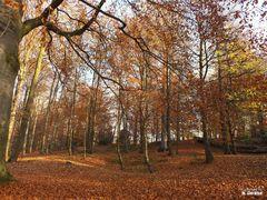 Herbstfarben II