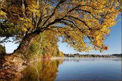 ~ Herbstfarben III ~