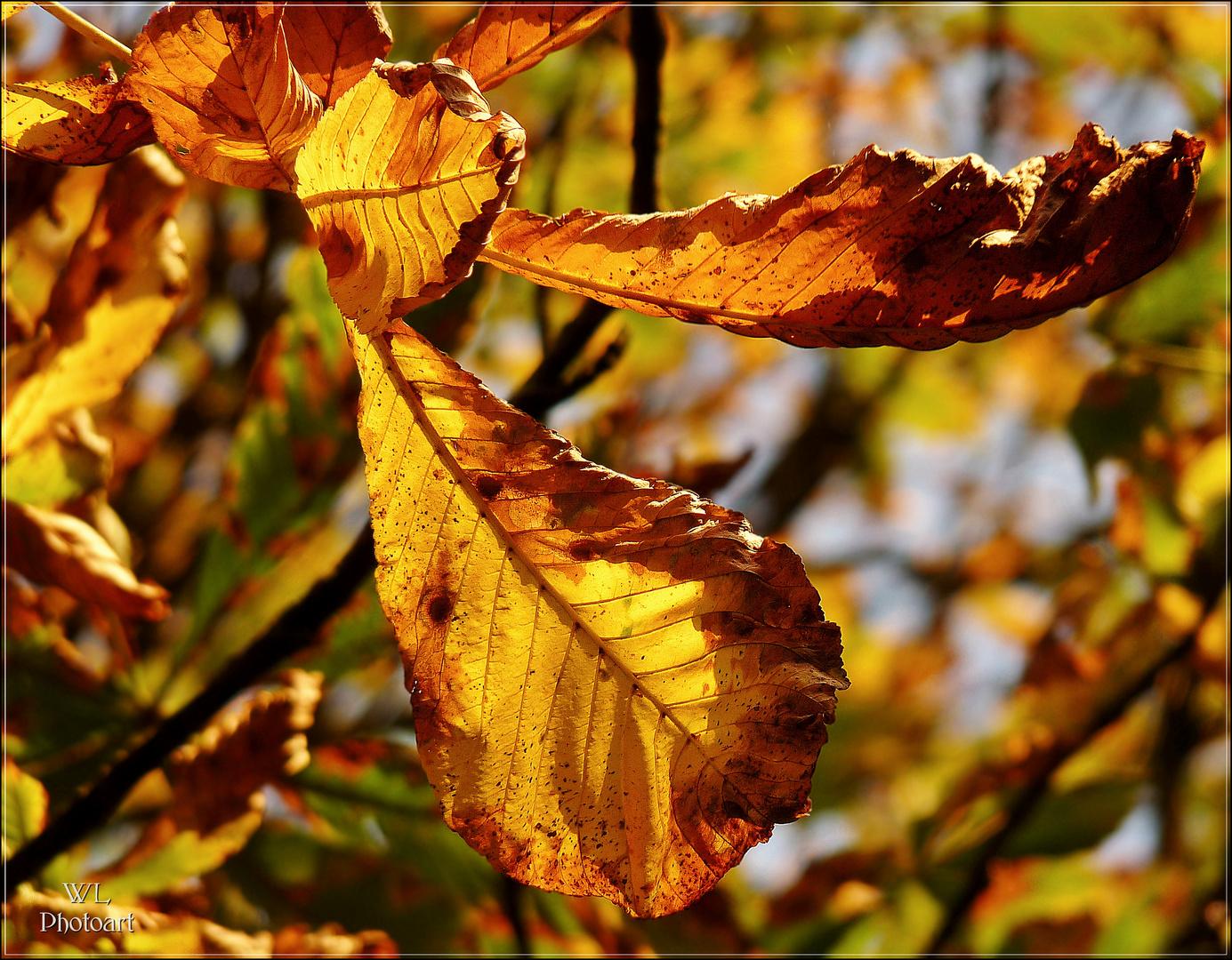 """"""" Herbstfarben im Abendlicht """""""