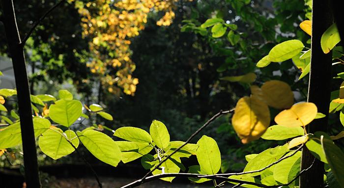 Herbstfarben im Abendlicht