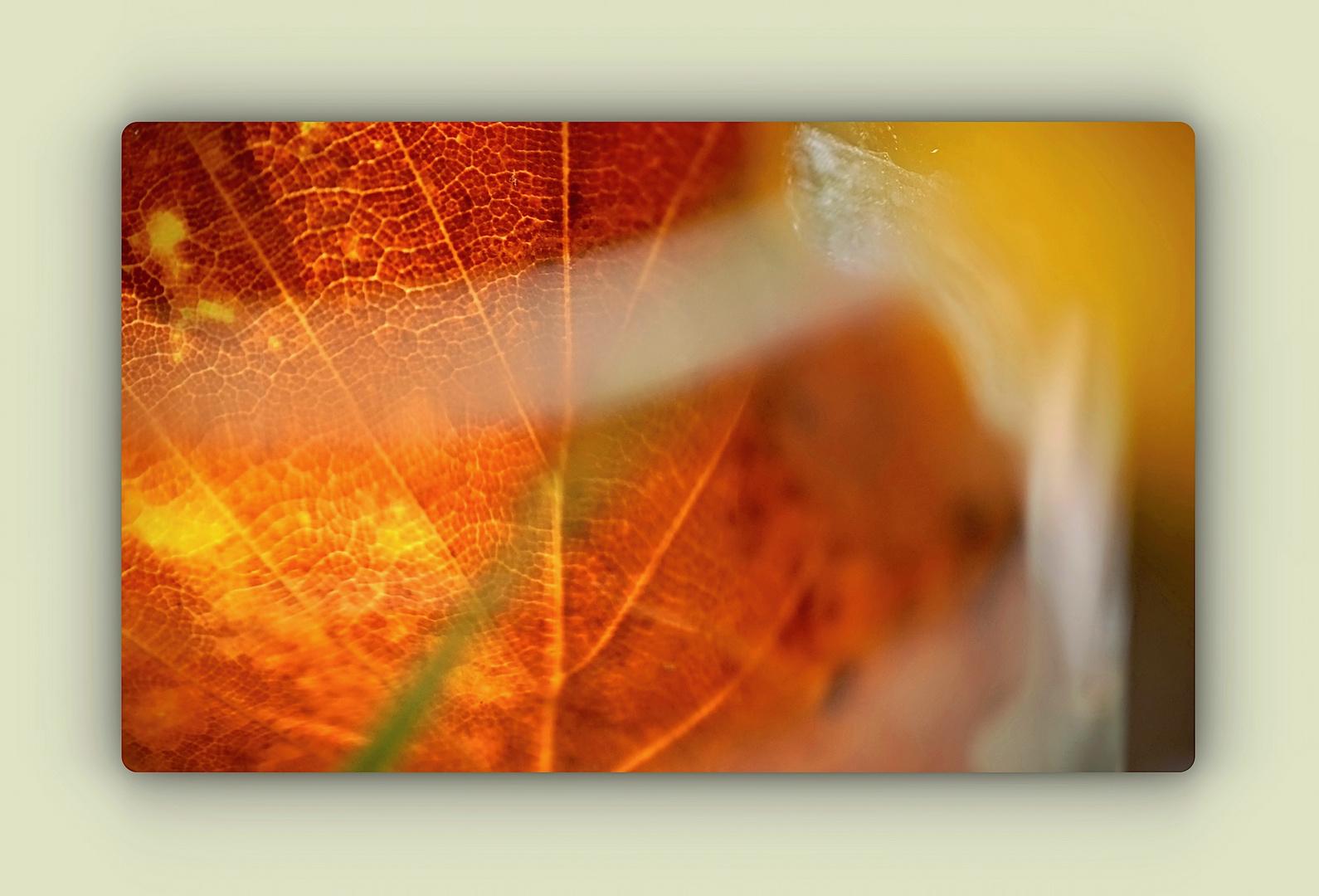 Herbstfarben im Glas