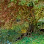 Herbstfarben im Teich